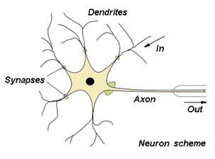 struktur syaraf manusia