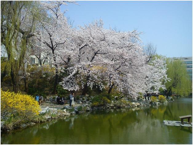Student Exchange : Inha University Spring Semester 2012